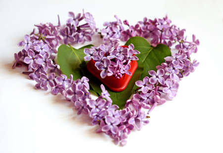 heart shaped leaves: Leaves and petals lilac heart shaped (Valentines Day, February 14, postcard, love � concept)