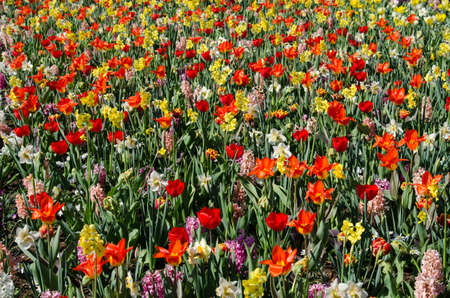 Beautiful spring background, texture of a large number of flowers (meditation, enthusiasm, joy, optimism, harmony, rest - concept)a