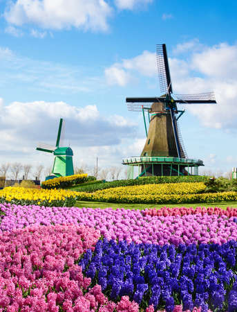 Magic spring landscape with flowers and patterns aerial Mill in Netherlands, Europe (harmony, relaxation, anti-stress, meditation - concept). Standard-Bild