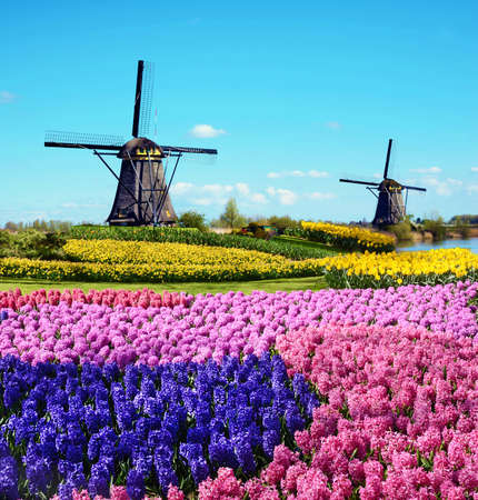 Magic spring landscape with flowers and patterns in aerial Mill Kinderdijk, Netherlands, Europe (harmony, relaxation, anti-stress, meditation - concept).
