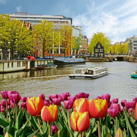 The charming landscape of tulips on the background of boats and houses on the canal in Amsterdam, Netherlands Reklamní fotografie