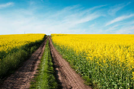 Beautiful landscape with road in the heaven middle of the field of rape (optimism, career, success, overcome difficulties - concept) 版權商用圖片