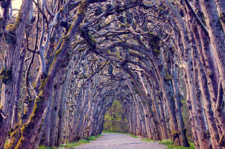 magical creepy landscape with a mystical alley, an arch of trees (Halloween, October 31 - concept) 版權商用圖片