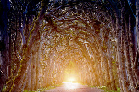Magic creepy landscape with a mystical arch with trees and light at the end of the tunnel (goal, Halloween, hope, solution - concept) 版權商用圖片