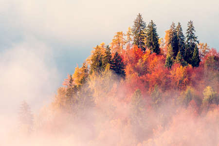 beautiful colorful bright landscape with autumn trees in the Alps in the morning fog