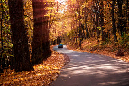 Beautiful charming landscape with a car on the road in the autumn forest in the sunshine rays.