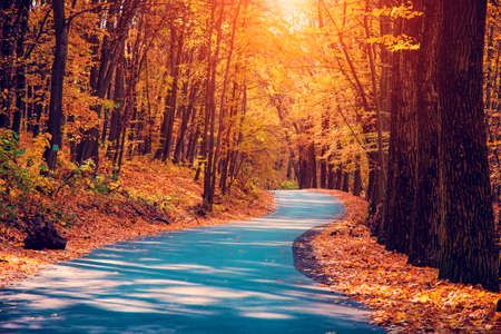 Mystic charming enchanting landscape with a road in the autumn forest and fallen leaves on the sidewalk 版權商用圖片