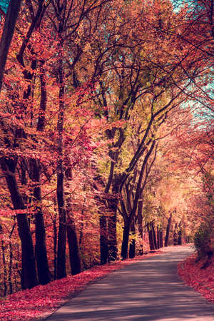 Mystic charming enchanting landscape with a road in the autumn forest and fallen red leaves on the sidewalk 版權商用圖片