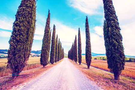 Magic beautiful landscape with road and cypress in Tuscany, Italy in San Quirico d'Orcia (Val d'Orcia). Excellent tourist places.