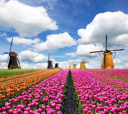 Beautiful magic colorful  landscape with windmills in Holland.  Exotic amazing places. Popular tourist atraction.