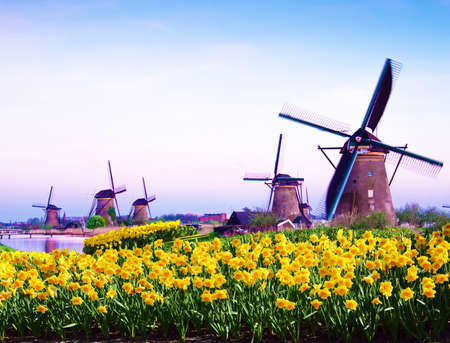fabulous mystical, stunning magical spring landscape with daffodils on the background of a cloudy sky in Kinderdijk, Netherlands. Charming places. (Meditation, anti-stress, Harmony - concept)