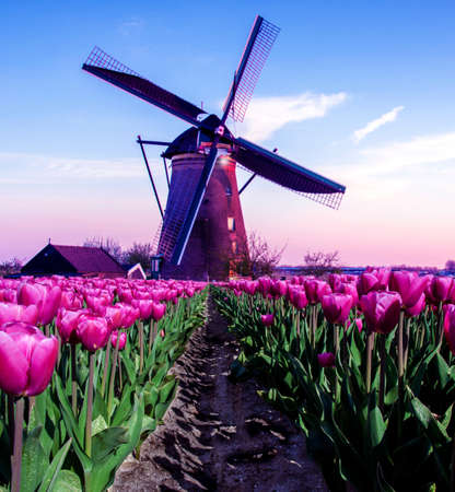 breathtaking beautiful inspirational landscape with a windmill in the middle of a tulip field in Kinderdijk, Netherlands. Fascinating places, tourist attraction. Standard-Bild