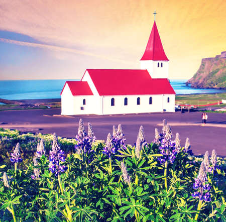 The famous Vik church (Vikurkirkja) and lupine flowers in Iceland. place of pilgrimage. Impressive landscape.  Exotic countries. Amazing places.