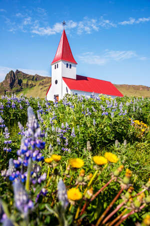 The famous Vik church (Vikurkirkja) and flowers of lupine in Iceland. place of pilgrimage. Impressive landscape.  Exotic countries. Amazing places.