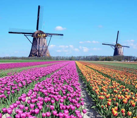 Fantastic landscape with windmills and tulip field in pastel colors (relaxation, meditation, stress management - concept)