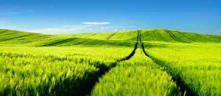 footpath: Endless Green Fields, Rolling Hills, Tractor tracks, Spring Landscape under Blue Sky
