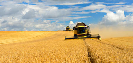 Two Combine Harvesters Cutting Wheat, Summer Landscape of endless Fields under blue sky with clouds Stock fotó