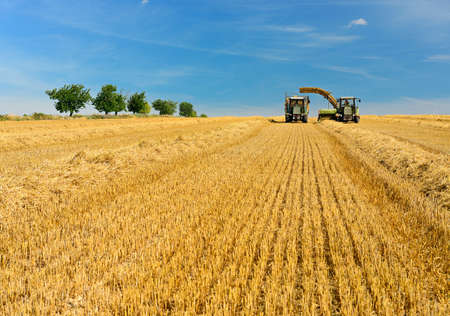 Farmers harvesting Straw, Baler unloads Bales onto Tractor Trailer, Summer Field Landscape under blue sky Stock Photo