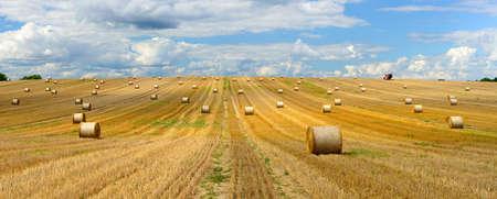 Farmer Harvesting Bales of Straw in Stubble Field, Summer Landscape under Blue Sky