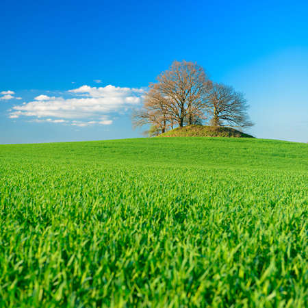 Grassy Green Fields, Bronze Age Burial Mound on the Horizon, Spring Landscape under Blue Sky