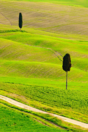 Typical Tuscany Landscape with Cypress Trees and Rolling Hills in Spring, Siena Province, Italy