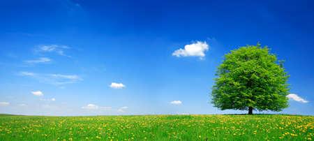 푸른 하늘에 구름과 린든 트리