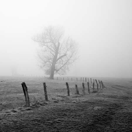 tristesse: Winter Melancholy, Bare Tree and old Fence in Foggy Rural Landscape