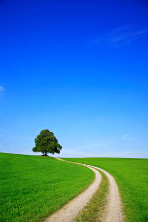 Farm track leading through Green Field towards Old Linden Tree on a Hill