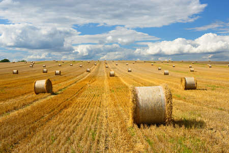 Bales of Straw at Endless Stubble Field during Harvest, Summer landscape under blue sky Stock Photo