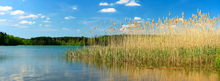 see through: Reeds at Calm Lake under Beautiful Blue Sky with Clouds Stock Photo