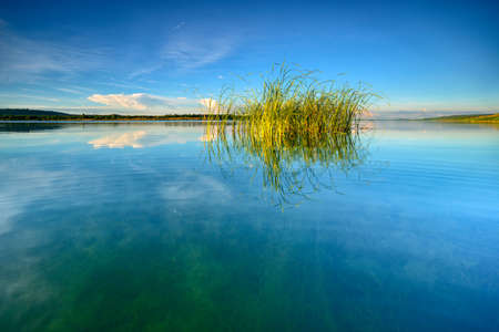 Crystal Clear Lake with Reeds at Warm Light at Sunset Stock Photo