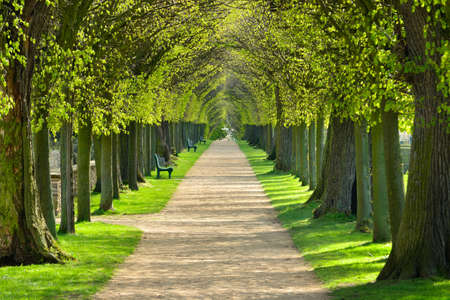 Avenue of Linden Trees, tree lined footpath through park in Spring Stockfoto