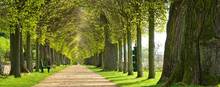 Avenue of Linden Trees, tree lined footpath through park in Spring Archivio Fotografico