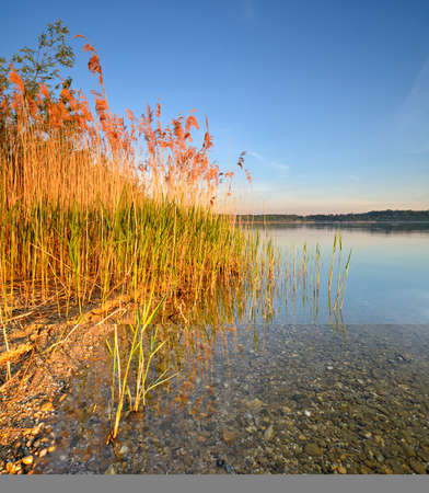 Clear Calm Lake with Reeds at Warm Light at Sunset
