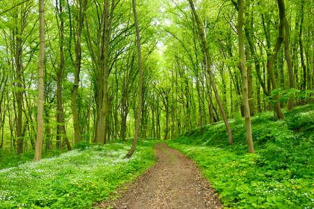 Winding Fußweg durch grünen Wald von Buche im Frühjahr