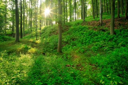 Forest of Deciduous Trees Illuminated by Sunbeams
