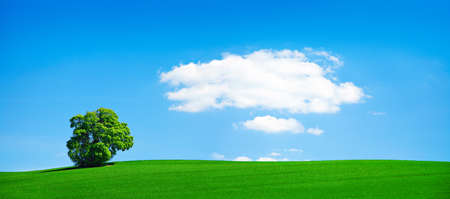 Rural Landscape of Green Tree in Tree under Blue Sky with Cloud