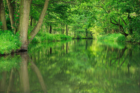 Green forest of deciduous trees reflecting in river, Spreewald, Germany