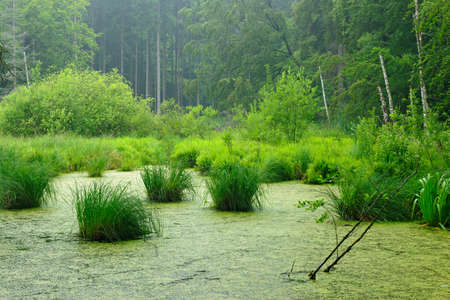 Swamp in Natural Forest, Muritz National Park, Germany