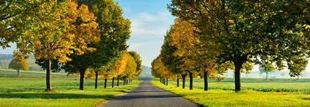 Avenue of Linden Trees in Autumn