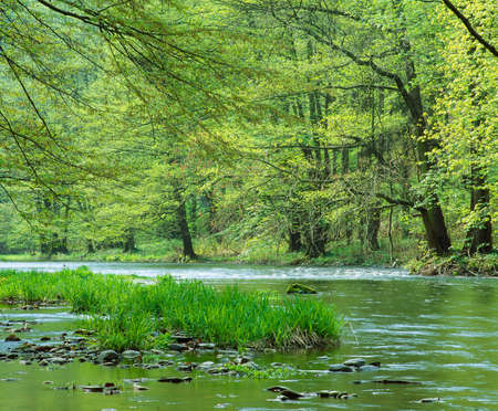 River flowing through green forest of deciduous trees in early spring