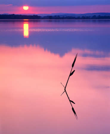 Blade of reed in a Calm Lake at Sunset, selective focus on the blade