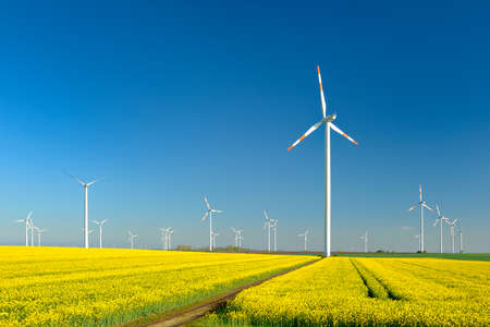 Wind Turbines at Canola Field under Blue Sky