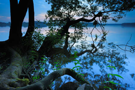 Gnarled Roots and Branches of Old Tree by Calm Lake at Sunrise
