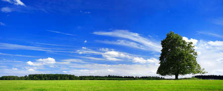 Tree on green field at Spring, blue sky with clouds Banco de Imagens