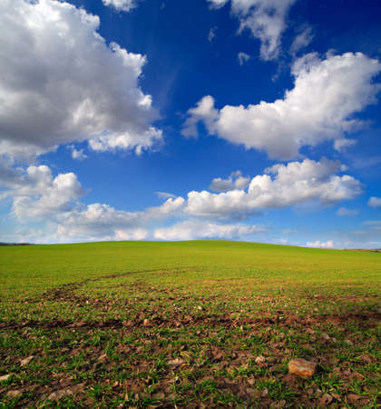 Sprouts of barley breaking out of the soil, Spring Landscape under Blue Sky with Clouds Фото со стока