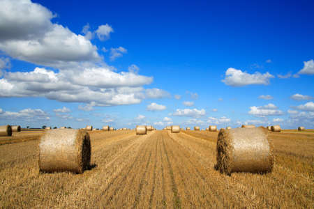 Harvesting Bales of Straw at Stubble Field, Summer Landscape Under Blue Sky Stock Photo