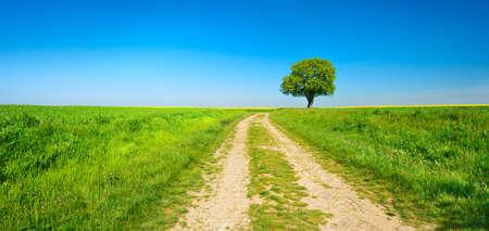 Dirt Road Through Field Landscape