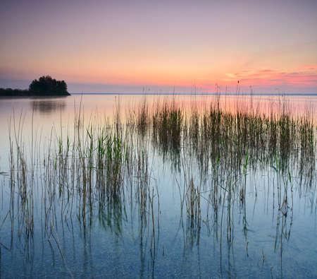 Reeds at Lake Muritz at Sunrise Stockfoto