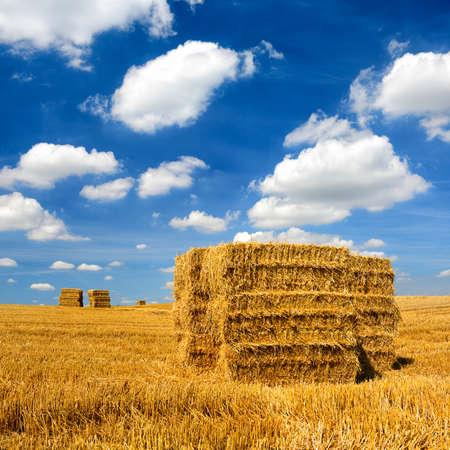 Bales of Straw at Stubble Field during Harvest, Summer Landscape under Blue Sky
